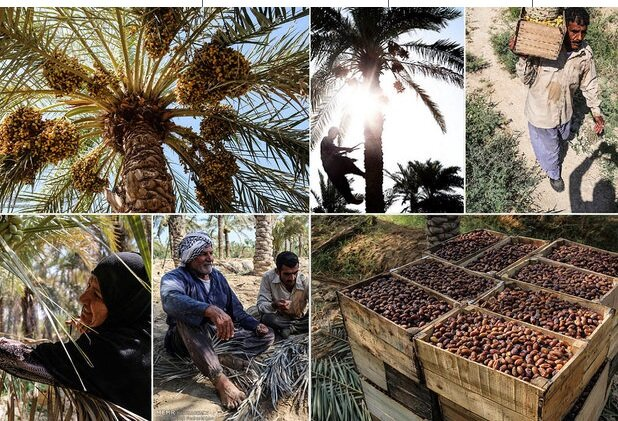 Iran Exports more than 60,000 tons of Iran dates