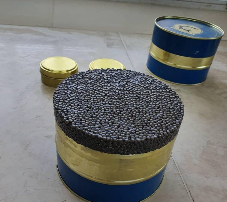 How to preserve caviar in refrigerator