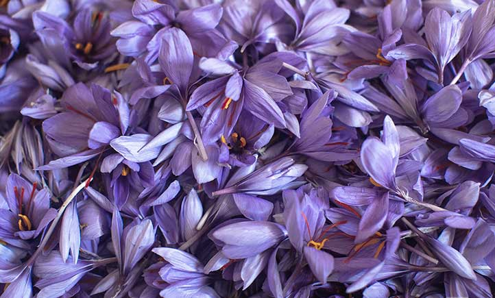 Saffron petals and the effects on the treatment of diseases